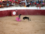 Toros Casassimarro Agosto 2012_7878611806_o