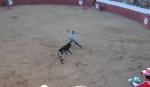 Toros Casassimarro Agosto 2012_7878631726_o